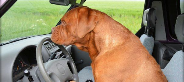 לימודי מורה נהיגה